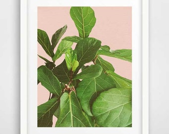 Tropical leaf print, fiddle leaf fig, botanical art, leaf print, cool posters, tropical decor, modern wall art, nature photography
