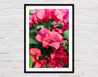 Floral Art Print, Flower Wall Art, Pink Flowers, Bougainvillea, Pink Blossoms, Floral Printable, Pink Art, Large Poster, Digital Download