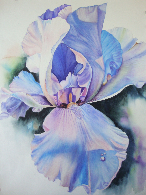 Iris watercolor painting original limited edition giclee print zoom izmirmasajfo