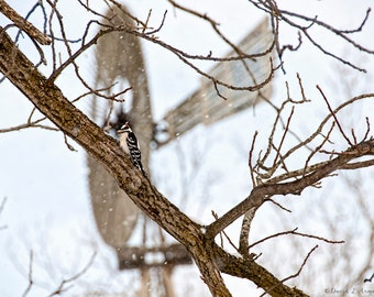 Fine Art Print, Downy Woodpecker and Windmill in Winter, Giclee Photographic Print, Free Freight