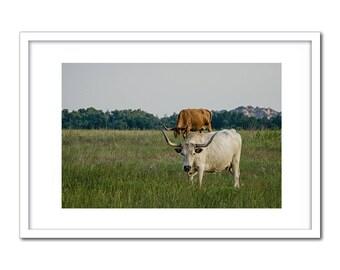 The White Longhorn