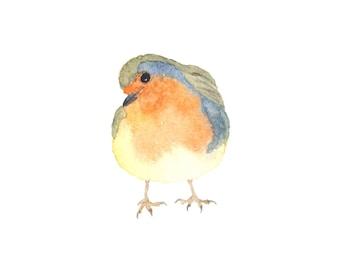 Orange and Blue Watercolor Robin - Fine Art Print