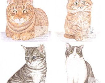 Cat Selection - Pack of 4 Acrylic Coasters
