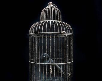 Black crow, jackdaw cage taxidermy