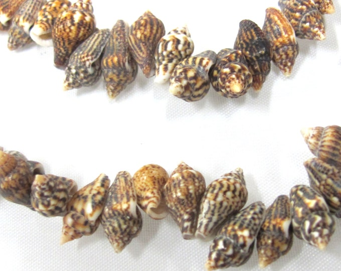 1 full strand  - Drilled natural small nassa shell beads - FULL 15 inches strand - SP057