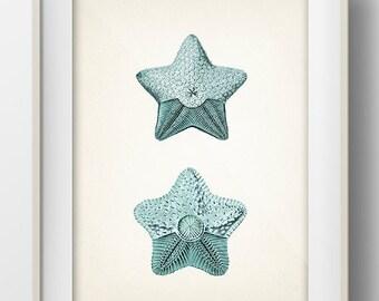Blue Starfish 2- SH-12 - Fine art print of a vintage natural history antique illustration