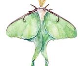 Luna Moth Print - Paintin...