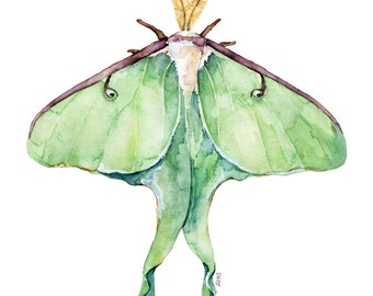 """Luna Moth Print - Painting titled, """"Luna Moth"""", Green Luna Moth, Watercolor Print, Insect Art, Insect Print, Luna Moth Wings, Moth Painting"""