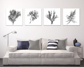 Large Canvas Wall Art Set, Black and White Botanical Prints of Seaweed, Set of Four, Square, Beach Decor, Ocean Home Decor, Seaside Artwork