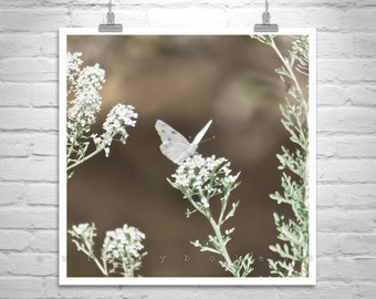 White Butterfly Photo, Butterfly Art, Butterfly Photography, Butterfly Gift, Insect Art, Butterfly Print, Butterfly Decor, Butterfly Picture