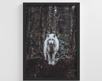 Forest Cold White Wolf Frameless Photo Poster Animal Art Print Stylish Home Decoration Wall Art Nursery Decor Living Room | IC170