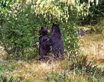 Bear Photo, Bear Print, Bear Hug, Black Bear, Wildlife Photography, Nature Prints, Nature Photography, Animal Print, Nature Decor, Wall Art