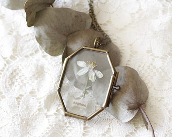 Glass Locket - Herbarium - Glass locket - Pressed flower - botanical - Sagesse