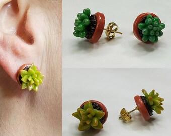 Succulent Earring Studs LIMITED Run