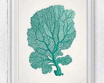 Sea fan coral no.05 - sea life print-Marine  sea life illustration A4 print SWC034