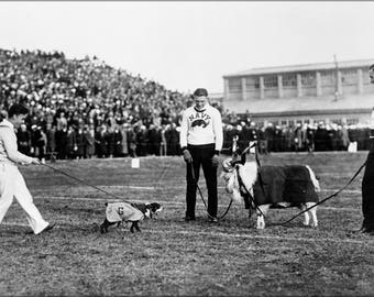 Poster, Many Sizes Available; Georgetown And Navy Mascots 1920S
