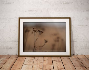 Grass. Printable nature photography. Digital Download. Print photography.
