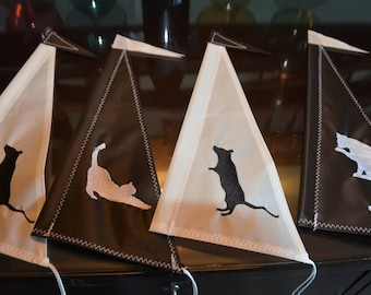 2018 Cat & Mouse (4) sails