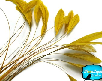 Stripped Feathers, 1 Dozen - GOLDEN Stripped Coque Tail Feathers: 345