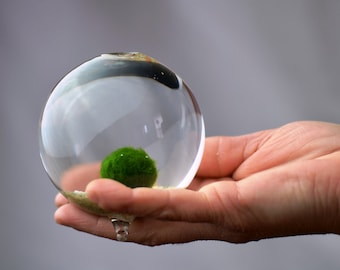 Marimo Terrarium // Japanese Moss Ball Aquarium //  Miniature Footed Bud Vase Container // Home Decor // Office Gift