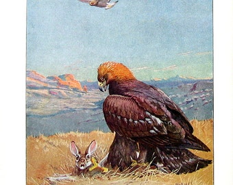Bird Print - The Golden Eagle - 1932 Book Page from Vintage Bird Book -10 x 7