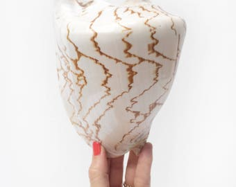 Large Natural Display Shell // beautiful vintage cone shaped specimen seashell with brown pattern / nautical style coastal beach home decor