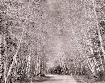 Road through Grove of Trees, Black and White