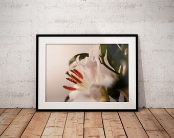 Oh Lily II | Botanical | Flower | Photo Print