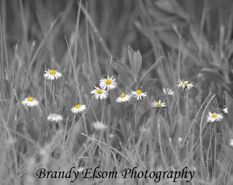 Daisy Print Black And White Color Splash Flower Photography Floral Print  Home Decor Office Decor Bedroom