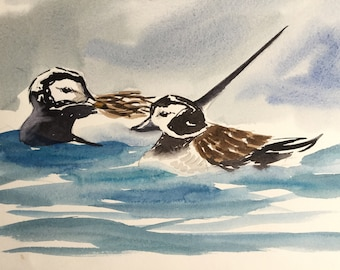 Long Tailed Ducks Iceland