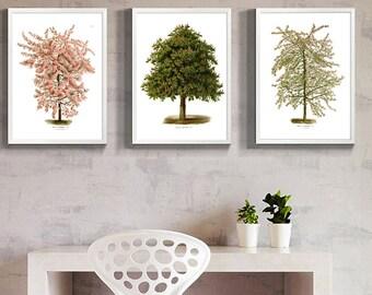 Tree Print - Tree Wall Art Decor -  Tree Botanical Print -  SET of 3
