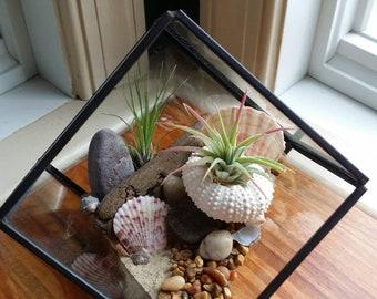 Air Plant Terrarium | Tillandsia | Beach Decor | Geometric Terrarium | Glass Terrarium | Air Plant Gift | Airplant | Pink Sea Urchin