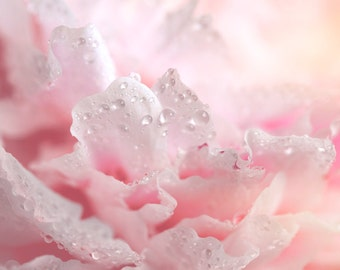 Nature Photography, Peony, Pink, Water drops, Dreamy, Fine Art print, Home Decor.