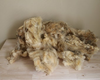 1 lb. wool fiber - Raw wool by the pound -  Raw unwashed sheep's wool for spinning, felting, or stuffing