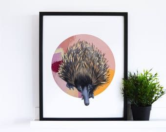 The Echidna // Abstract Collection