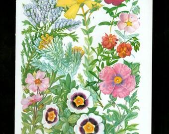 WILD FLOWERS Vintage Botanical Print Antique, pink plant print 65 botanical print, bookplate art print, herb plants plant wall print