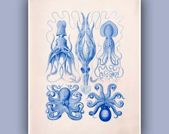Nautical Art, Octopus print, Ocean Print, Vintage Cephalopods images, blue print,  mollusks Nautical art, Coastal Living, Sea Creatures