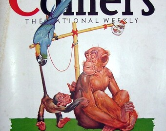 1929 Collier's Front Page Only Lawson Wood Chimpanzee, Monkey, Parrot, Print Ad, Magazine Page, Dixie Bell Gin ad, Artist Drawn, Lawson Wood