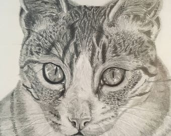 Cat Portrait Print - Graphite