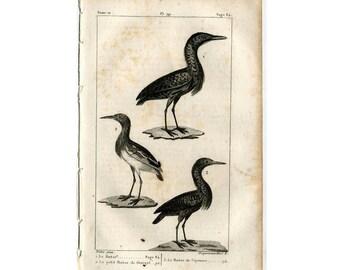 1817 bittern shore birds original antique bird engraving - water birds - le butor