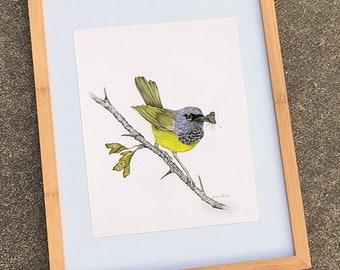 MacGillivray's Warbler (archival print)