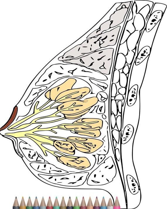 Erwachsenen Färbung Seiten Anatomie zum Ausmalen Buch