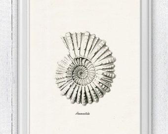 Grey Ammonitida- Sea life print -  seashells wall art home decor -A 4 print SAS211