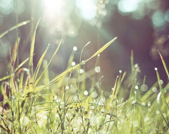 GREEN GRASS, Blades of Grass, Green Lawn, Yard, Nature Print, Wall Poster, Dew, Spring, Springtime, Seasons, Drops of Water, Fine Art Photo