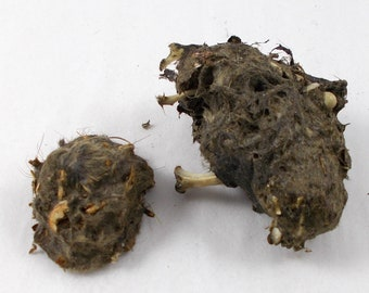 2 Owl Pellets to Dissect from Rodent Mouse Rat, Fur Whiskers Bones, Creepy Specimens