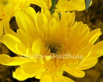 Yellow flower macro fine art photograph 5x7 matted 8x10