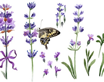 Violet fragrant lavender PNG watercolor set
