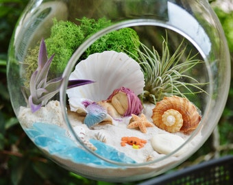 "Little Mermaid Beach Terrarium Kit ~7"" Air Plant Terrarium Kit ~ Coastal Living Beach Decor ~ Sleeping Mermaid in Shell ~ Mermaid Gift"
