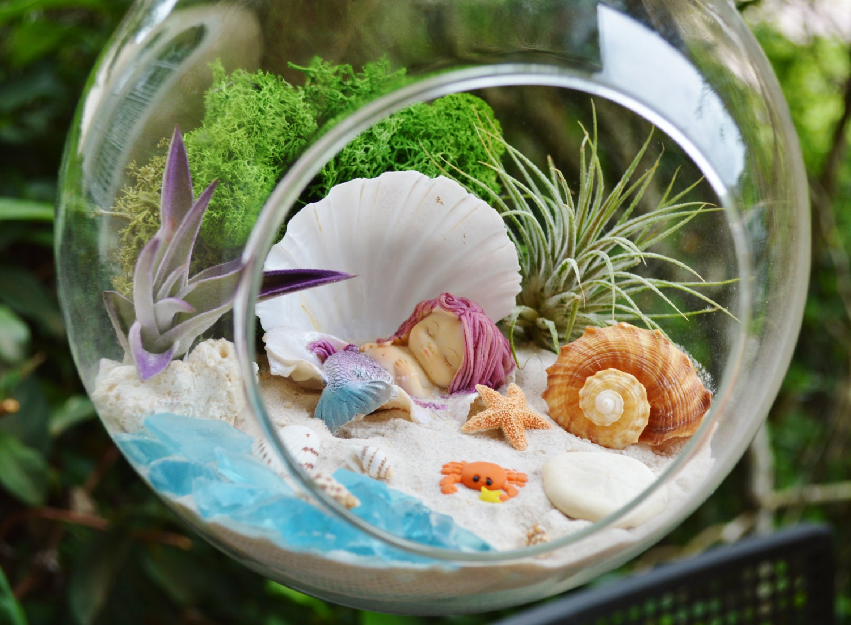 Mermaid beach terrarium kit 7 air plant terrarium kit zoom solutioingenieria Image collections