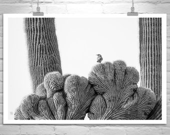 Black and White Cactus Art, Bird Art, Fine Art Photography, Saguaro Cactus Photo, Desert Wren Bird Print, Bird Photography, Southwestern Art